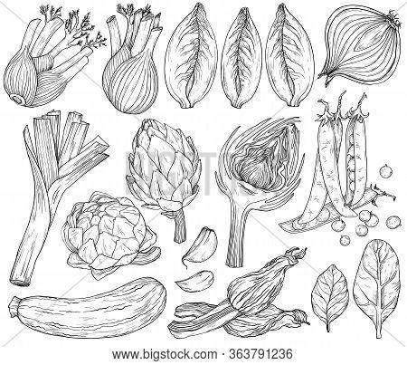 Vector Set Of Nature Mediterranean Vegetables. Fresh Organic Food. Vegetables Vintage Hand-drawn Ske