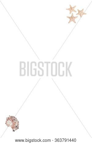 Coastal Shells With White Copy Space Set In Vertical Orientation For Custom Text Or Graphics Design
