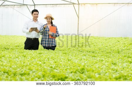 Organic Vegetable Farm, Asian Woman Farmers Inspect Organic Vegetables In The Farm, Vegetable Salad,