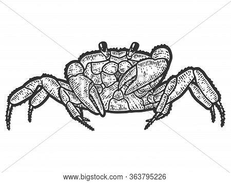 Arthropoda Crab. Sketch Scratch Board Imitation. Black And White.