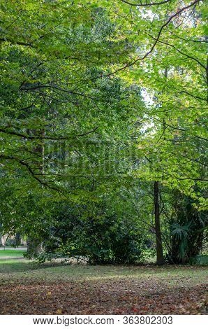 Green Lawn In The Park With Fallen Leaves. Green Trees. Fallen Leaves. Secluded Place. Vertical Fram