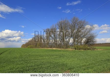 Leafless trees on green meadow. Spring landscape in Ukraine
