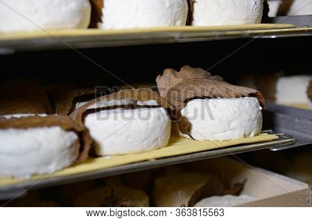 Well Ripened Goat And Ewe Cheeses In Cellar Ripening With Chataignier Leaves
