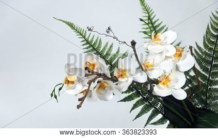 White flowers Phalaenopsis on a white background. Orchid. Decorative eternal flowers