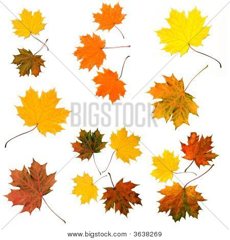 Colored Leaves