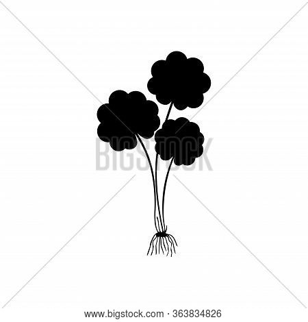 Gotu Kola - Medicinal Plant. Centella Asiatica Which Is Known As Gotu Kola Isolated On White Backgro