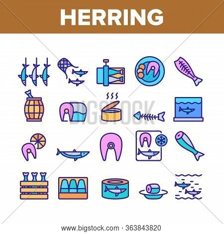 Herring Marine Fish Collection Icons Set Vector. Herring Sliced Piece And Fillet, Skeleton And Carca