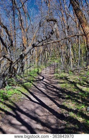 Hiking Trails In Oquirrh, Wasatch, Rocky Mountains In Utah Early Spring With Leaves. Backpacking, Bi