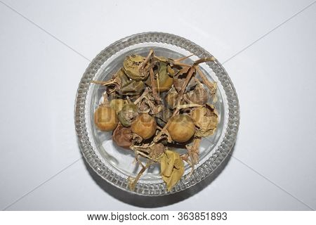 Febrifuge Plant Dried Yellow-berried Nightshade, Wild Eggplant Botanical Name Solanum Xanthocaprum K