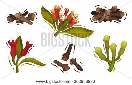 Dried Clove In Pile And Blossomed Flower Buds Vector Set