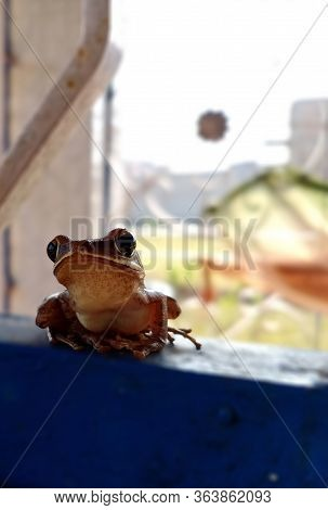 The Frog Is The Most Common And Well Known Amphibian In India. They Are So Abundant And Widespread A