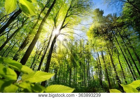 Scenic Forest Of Fresh Green Deciduous Trees Framed By Leaves, With The Sun Casting Its Warm Rays Th