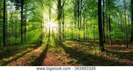 Panoramic Landscape: Beautiful Rays Of Sunlight Shining Through The Vibrant Lush Green Foliage And C