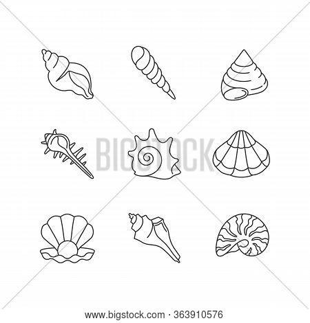 Sea Shells Pixel Perfect Linear Icons Set. Various Molluscan Shells, Conchology Customizable Thin Li