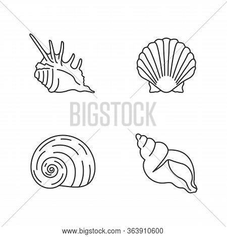 Exotic Sea Shells Pixel Perfect Linear Icons Set. Customizable Thin Line Contour Symbols. Sea Scallo