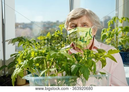 Portrait Of An Elderly Woman Who Grows Tomato Seedlings In Home Isolation. Positive Craze During Qua