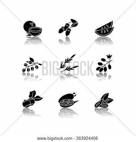 Hair Oil Ingredients Drop Shadow Black Glyph Icons Set. Jojoba Essence For Nourishment. Herbal Cosme