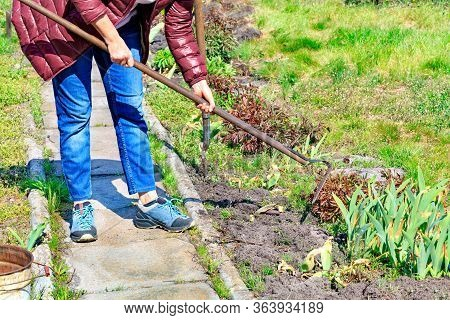 Using A Hoe, The Farmer Manually Weeds The Flower Garden And Removes Weeds From The Soil In The Gard
