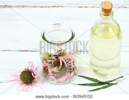 Making Tincture From Flower  Heads Of Narrow Leaf Purple Cone Flower. Echinacea Angustifolia, The Mo