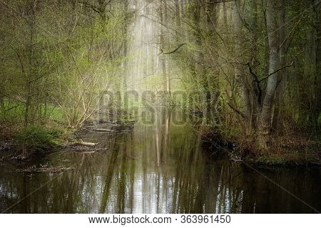 Calm Creek Flows Through An Enchanted Forest With Reflections In The Water, Copy Space, Selected Foc