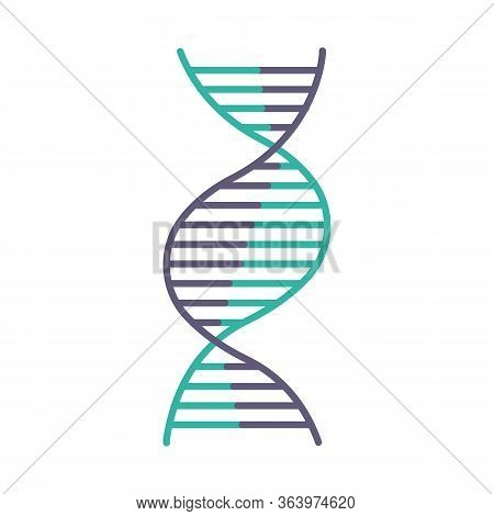 Right-handed Dna Helix Violet And Turquoise Color Icon. B-dna. Deoxyribonucleic, Nucleic Acid Struct