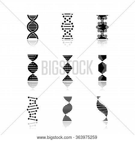 Dna Spirals Drop Shadow Black Glyph Icons Set. Deoxyribonucleic, Nucleic Acid Helix. Spiraling Stran