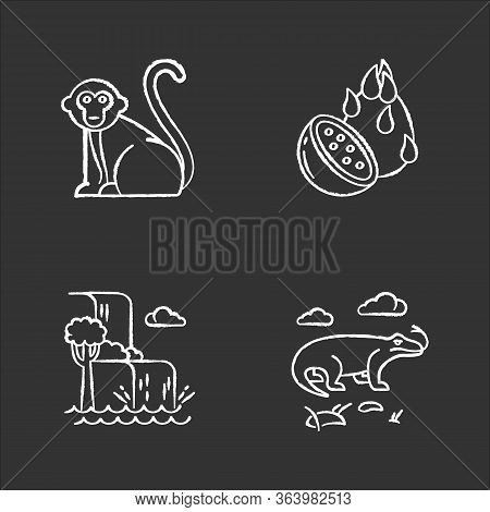 Indonesia Chalk Icons Set. Tropical Country Animals. Trip To Indonesian Islands. Explore Exotic Wild