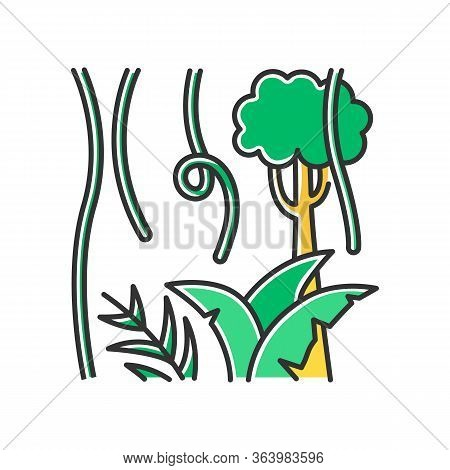 Rainforest Plants And Trees Color Icon. Evergreen Forest Vines. Lianas And Fern Frond. Trip To Indon