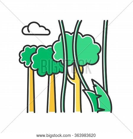 Rainforest Plants And Trees Color Icon. Evergreen Forest Vines. Lianas And High Trees. Trip To Indon