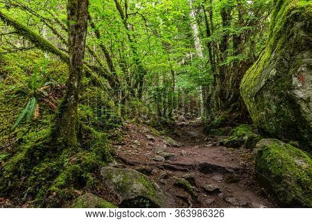 Beautiful Hiking Trail That Runs Along A Forest In The Mountains Of British Columbia Canada.