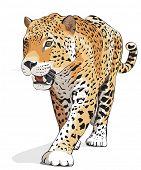 Jaguar, wild cat Panther. Vector illustration, White background, shadow. Photos of jaguars in portfolio poster