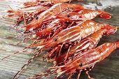 Live large shrimp on wet fishing dock poster