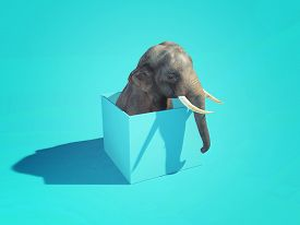 Elephant With His Head Out Of The Box . Think Outside The Box Concept . This Is A 3d Render Illustra