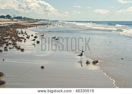 Gulls Along The Beach