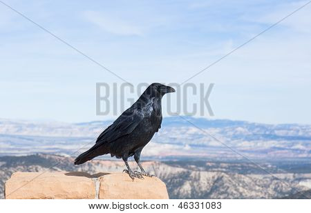 A Raven View