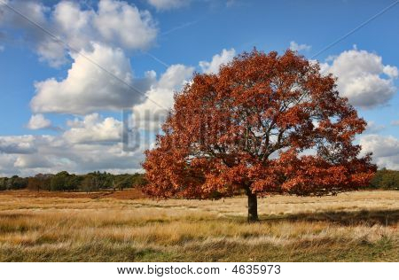 Single Tree In A Field On A Lovely Autumnal Day