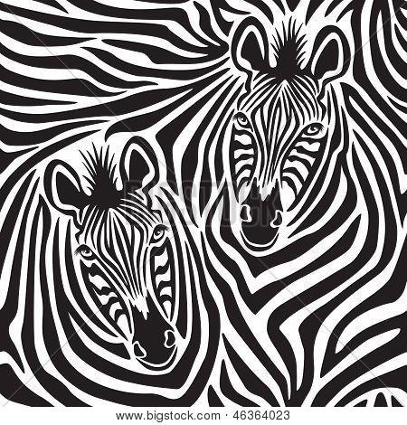 Zebra pareja