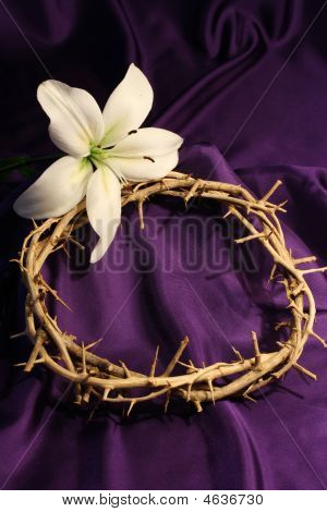 Crown Of Thorns With One Lily