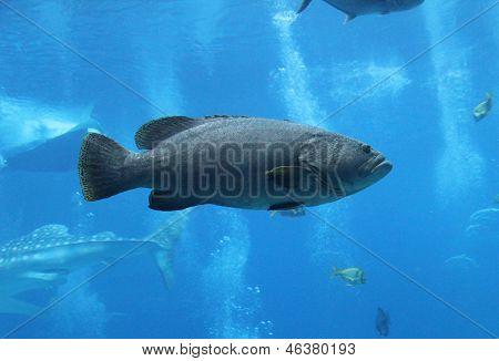 Fish Profile