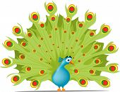 a beautiful but cartoon version of a peacock with opened feathers. poster