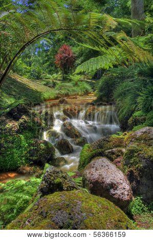 Creek in tropical landscape (Sao Miguel, Azores)