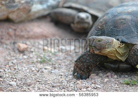 Tortoise Race