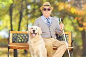 Senior blind gentleman sitting on a bench with his labrador retriever dog, in a park poster