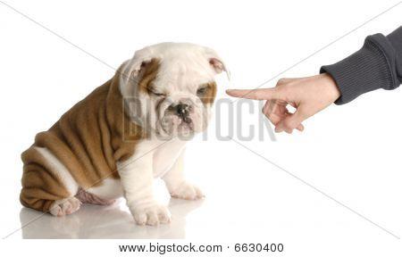 Finger Wagging At Bad Bulldog