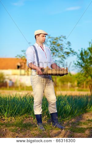 Gardener Holding Box With Potatoes, Countryside