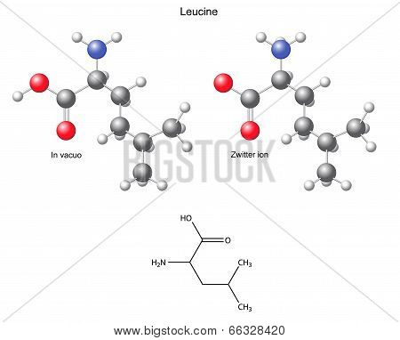 Leucine (Leu) - Chemical Structural Formula And Models