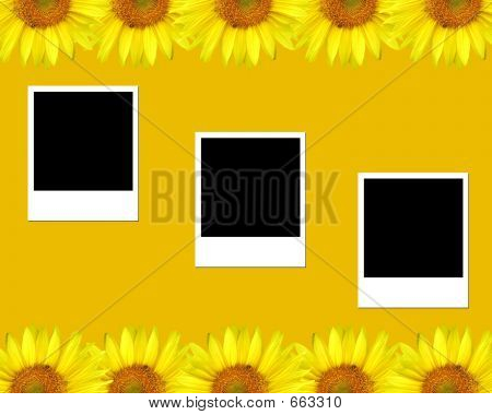 Sunflower, Blank Photos