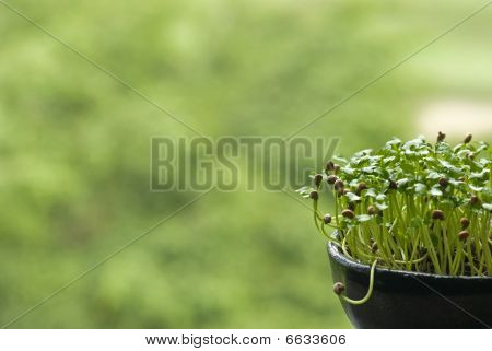 Growing Seed in Pot
