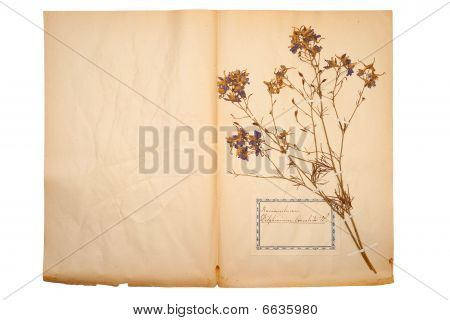 Dried Flower On Old, Gone Yellow Paper