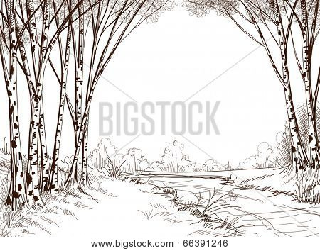 Birch tree forest, graphic background